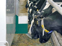 The Free Stall Feeder from GEA Mullerup